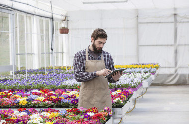 Young adult male garden worker in apron using digital tablet at greenhouse